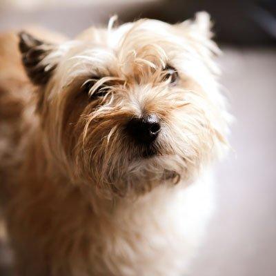 Dog Obedience Training Ireland