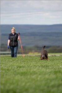 Labradoodle Pet Dog Training